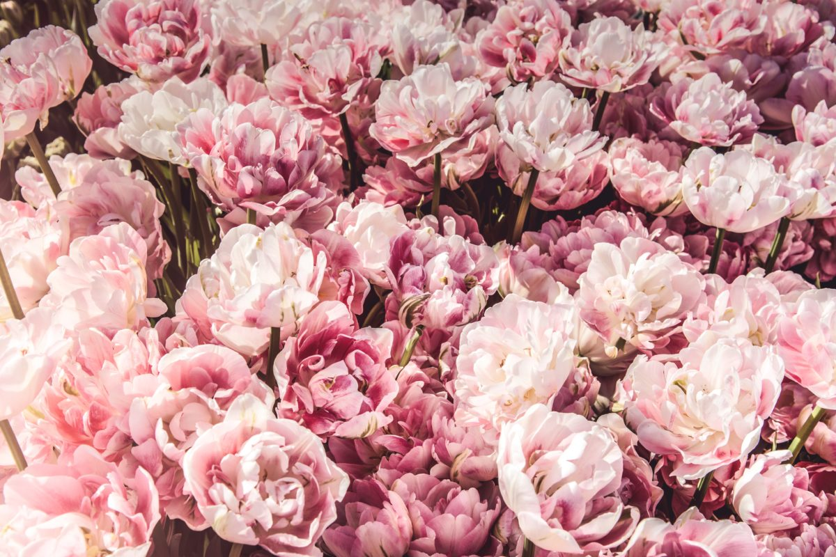 Photo by Miroslavaさんのお花の作品です