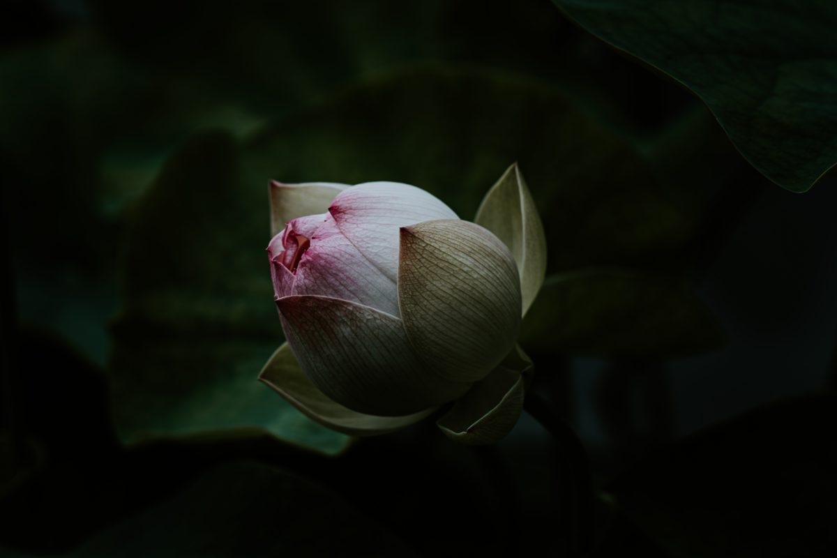 Photo by Xuan Nguyen on Unsplash