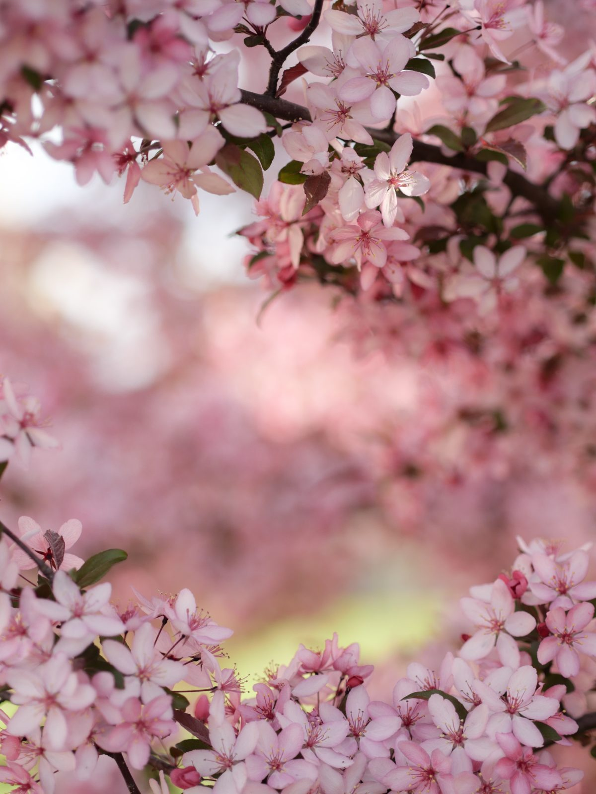 Photo by Aaron Burden さんのお花の作品です