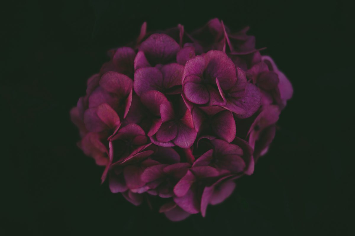 Photo by Markus Spiske on Unsplash flower