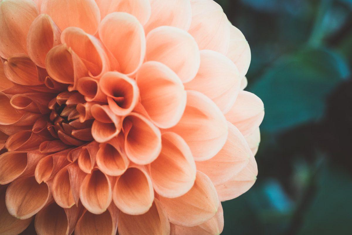 Photo by John Weinhardtさんのお花の作品