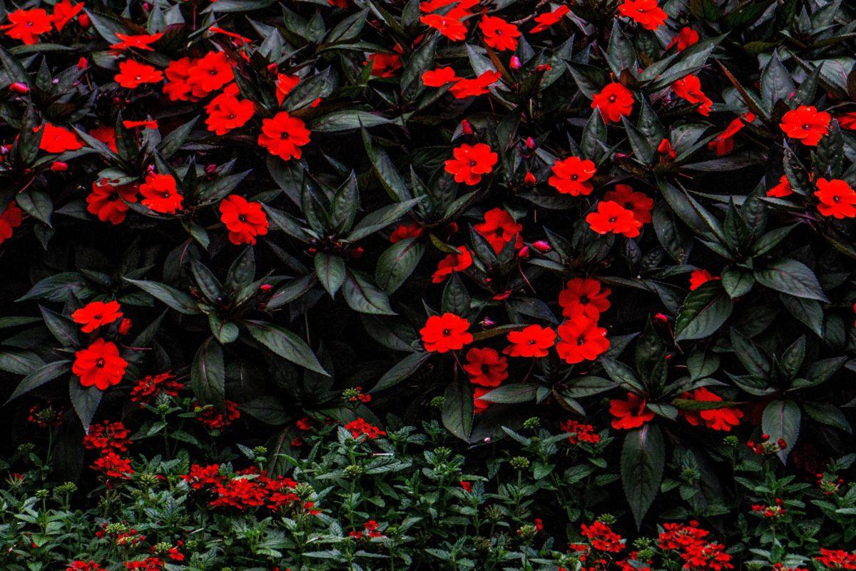 Photo by Will Goldenさんのお花の作品です